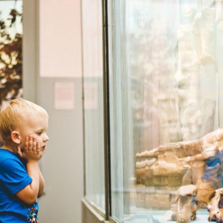 Freier Eintritt in Zoos und Museen