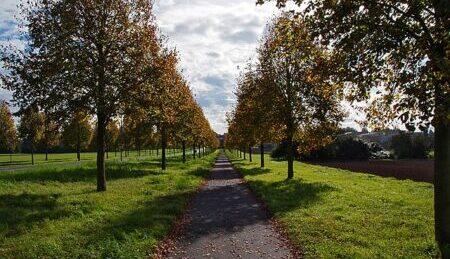 640px-Fahrradweg_Homburger_Landstraße